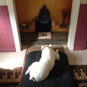 Dog sleeping on meditation cushion in front of buddha