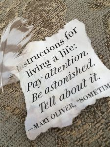 """picture of Mary Oliver quote """"instruction for living a life:"""