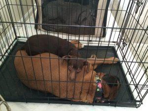 canine-evacuees