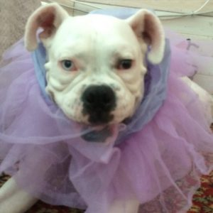 dog with pink tutu around his neck