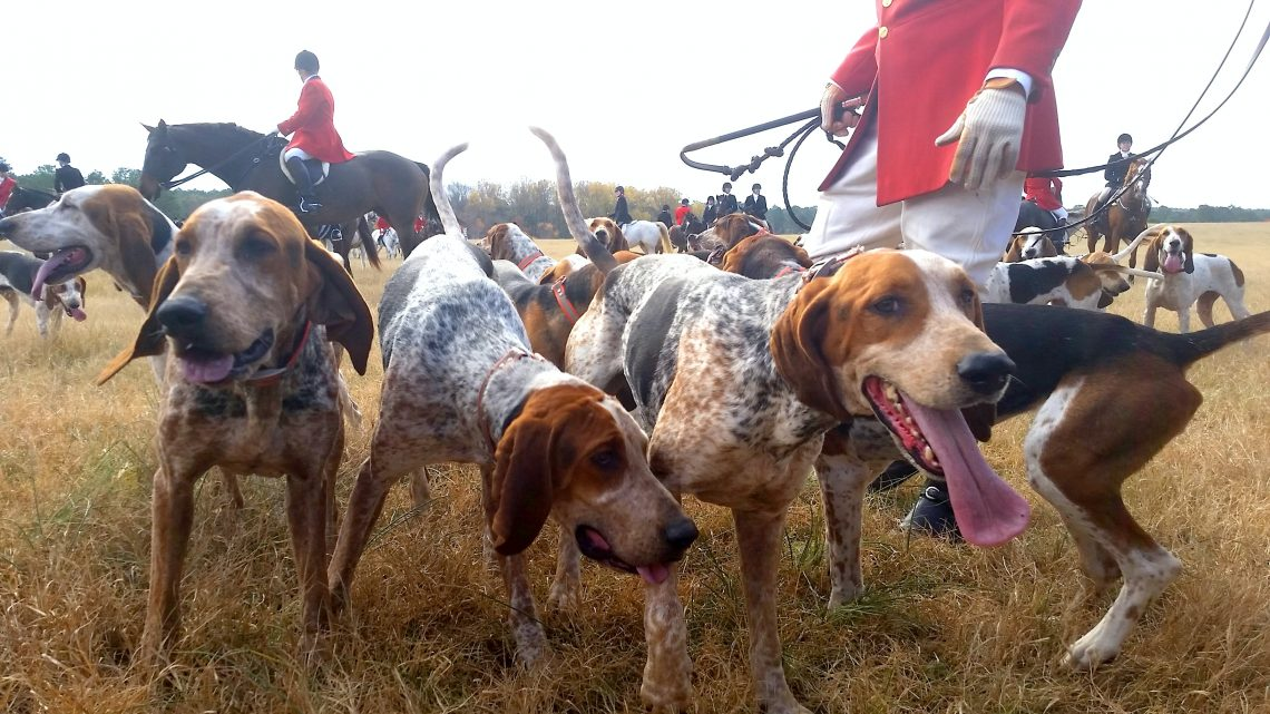 litter of dog on grass field
