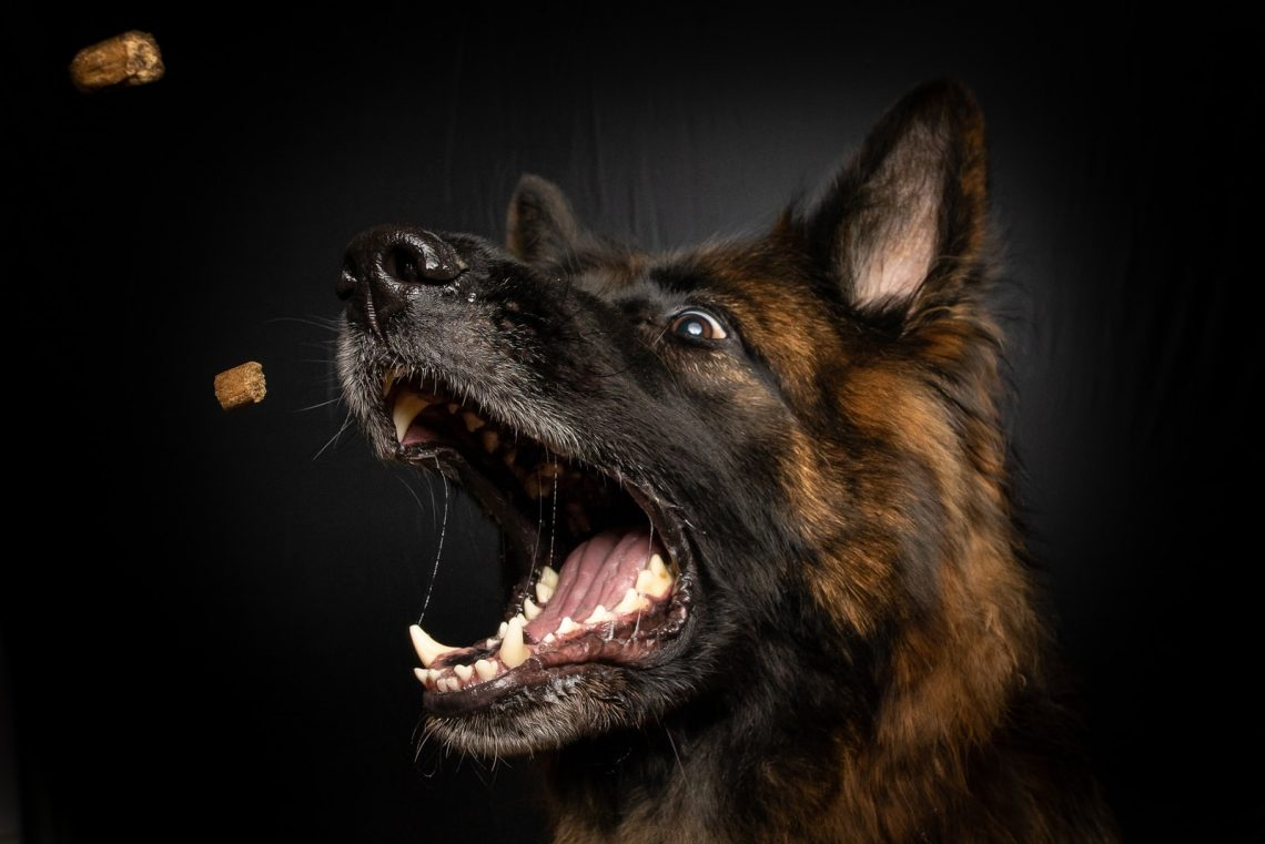 brown and black medium-coated dog opening mouth